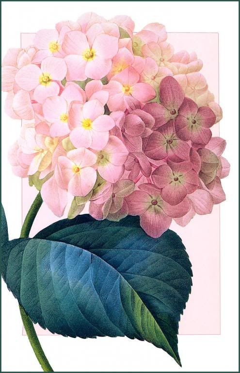 Flores Y Letras Para Decoupage Florecillas Pinterest