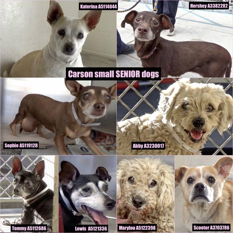 URGENT SENIORS!!!!CARSON, CA!INTERESTED IN FOSTERING