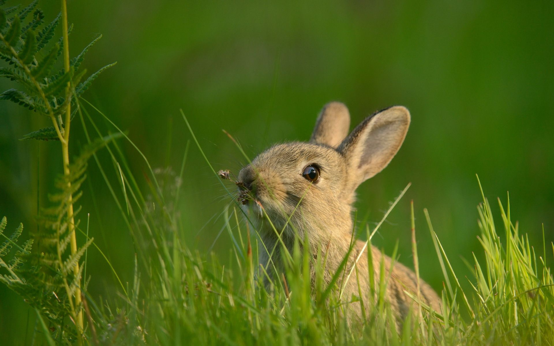 Animal Rabbit Wallpaper