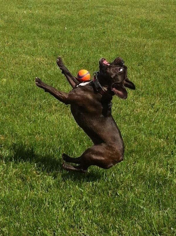 Las 20 fotografías más graciosas de perritos capturadas en el momento justo.