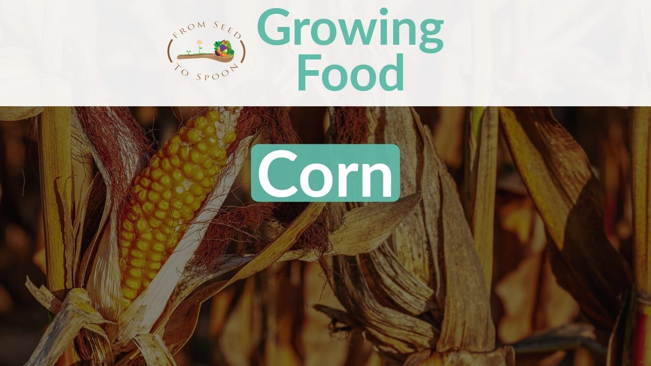 Although Corn Isn T The Most Practical Thing For Us To Grow It S