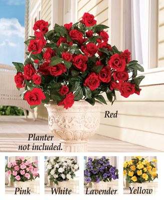 Floral rose bushes set of 3 rose bush and rose floral rose bushes set of 3 mightylinksfo