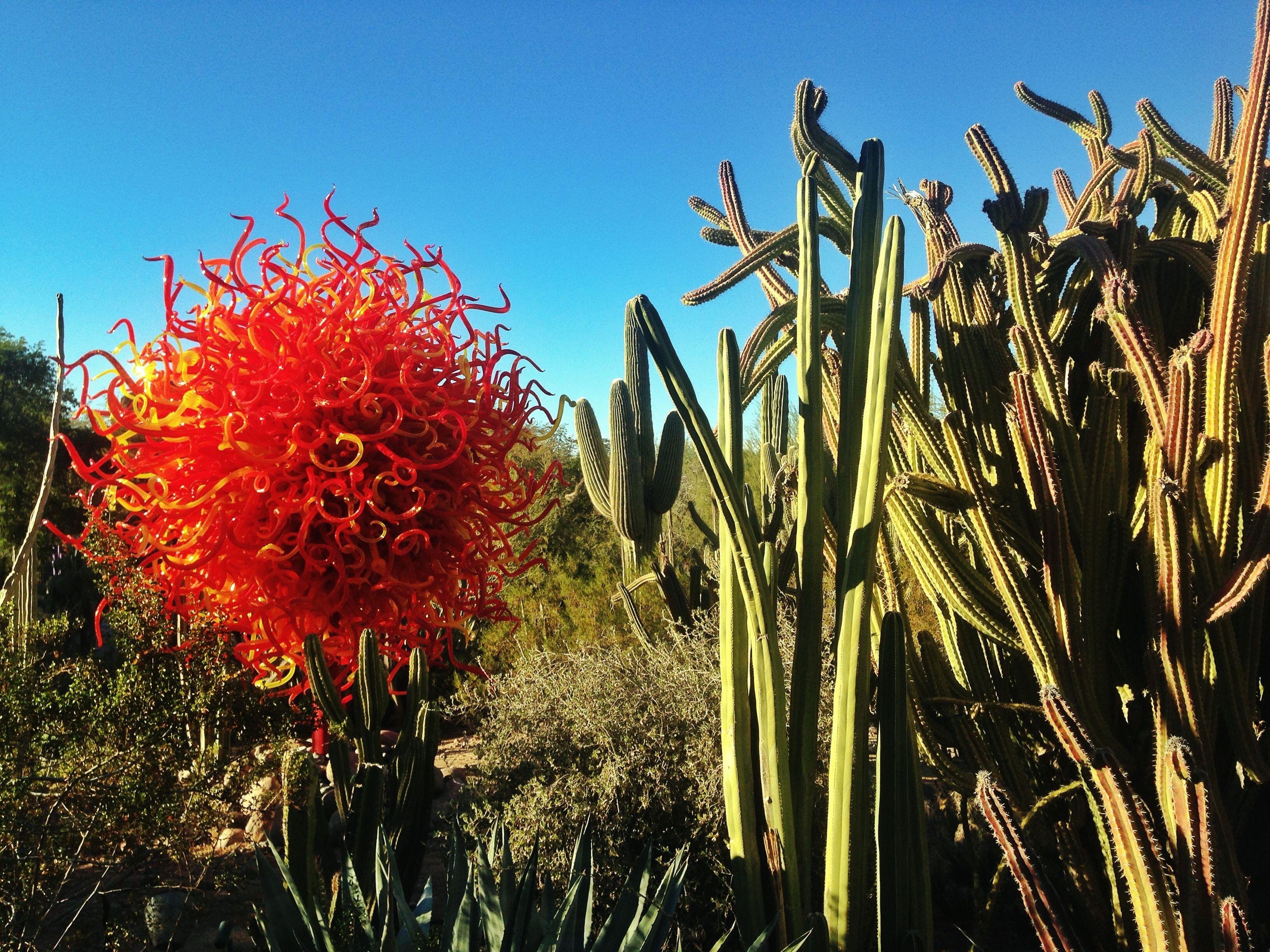 chihuly phoenix botanical garden | cacti-desert-scottsdale-phoenix