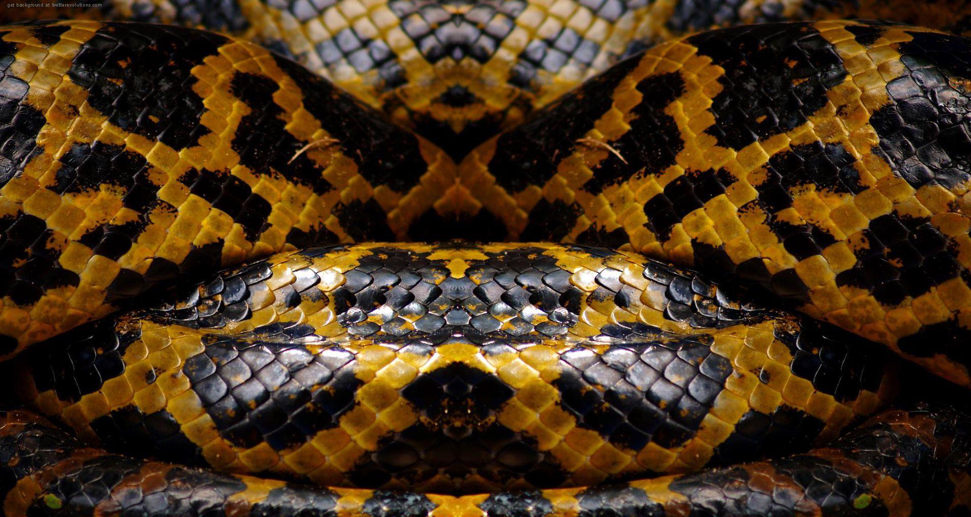 Snake Skin Texture & Color Pinterest