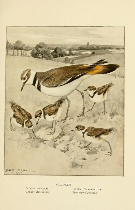 Gray lady and the birds; - Biodiversity Heritage Library