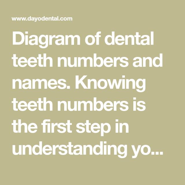 Diagram Of Dental Teeth Numbers And Names Knowing Teeth Numbers Is