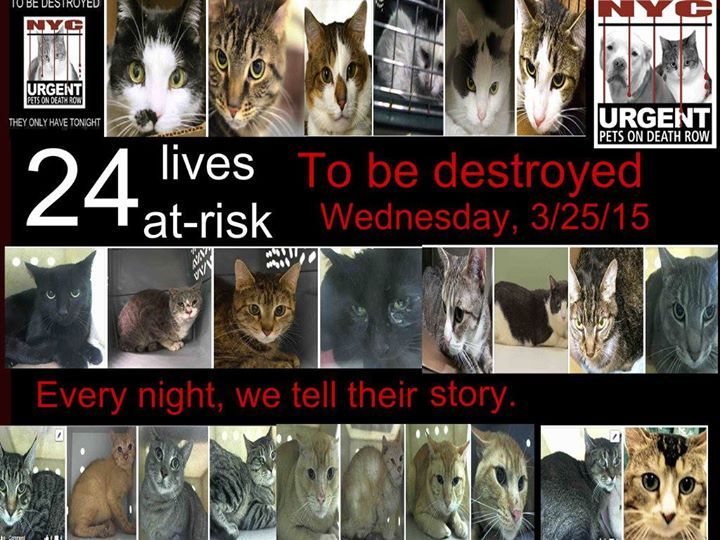 ** TWENTYFOUR LIVES AT RISK ** NYC ** 24 WONDERFUL Cats