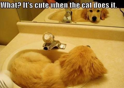 A Dog Laying In The Sink I Ve Seen Cats Do This Alot But Never A Dog Funny Animals Animals Dog Shaming