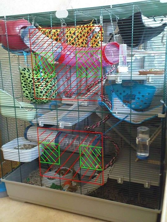 Rat Cage Set Up Like How The Litter Tray Is A Level Of Its Own Rat Cage Pet Rats Hedgehog Pet