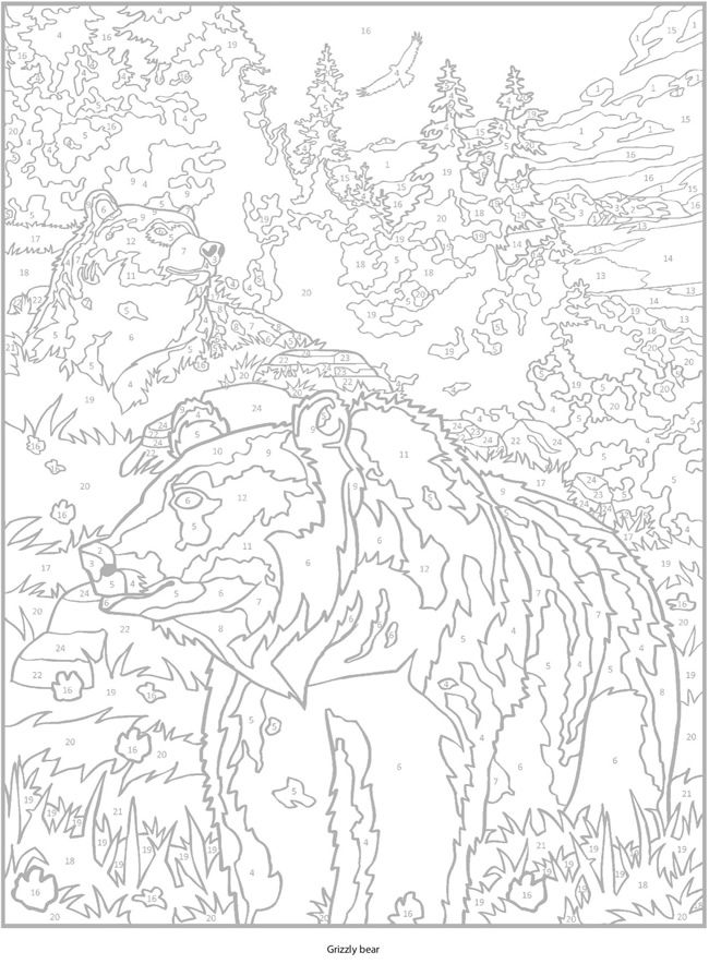 Welcome to Dover Publications Creative Haven Wild Animals Paint by ...