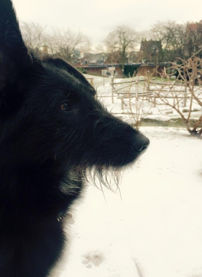 Isabel Mix Pawshake Dogs