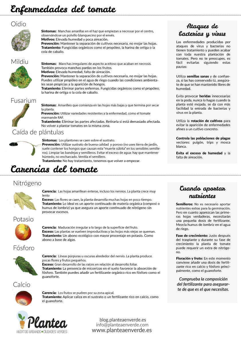 Enfermedades Del Tomate Descarga La Gu A Completa Para Cultivar  ~ Como Cultivar Tomates En El Huerto