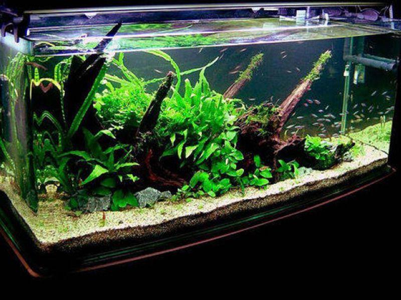 Aquarium driftwood car interior design fish tanks for Aquarium interior decoration