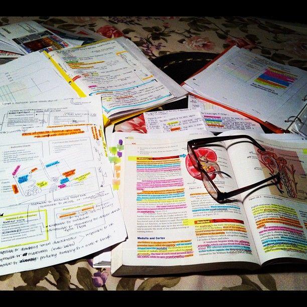 Highlight All The Anatomy S T U D Y Pinterest Anatomy