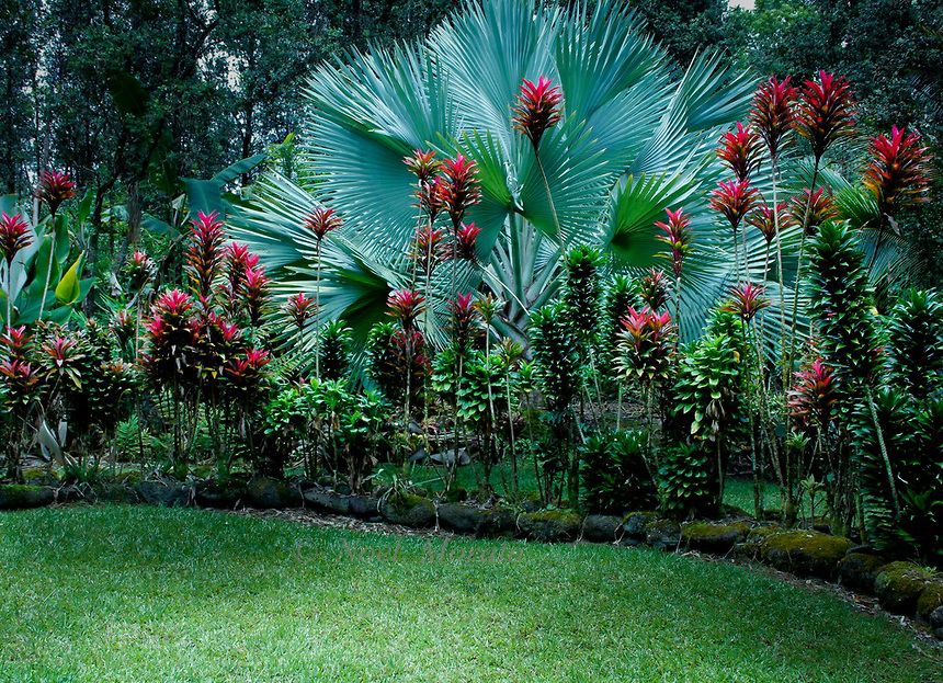 "Garden Design Hawaii tropical garden this one has ""nampi"" (the bright pink plant, an"