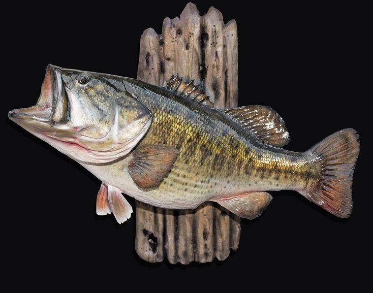 Largemouth bass mounts google search fish to do for Bass fishing yard sale