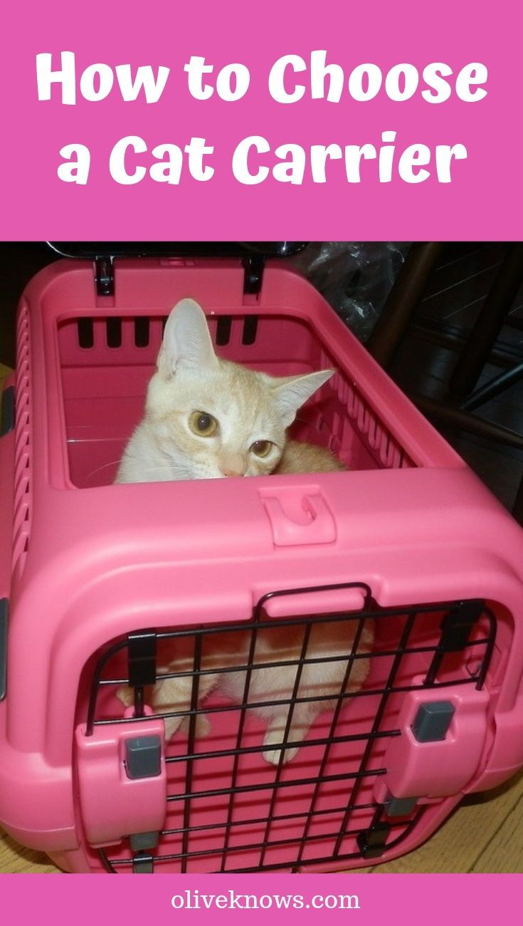 How to Choose a Cat Carrier OliveKnows Cat carrier