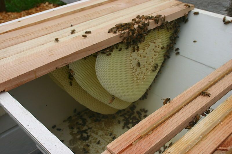 Top Bar Bee Hive