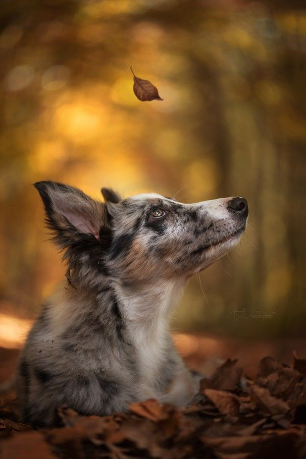 Composition Techniques Photo Contest Winners Viewbug Blog With Images Bordercollie