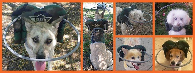 Blind Dog Halo Camo Dogs Blinds Animals