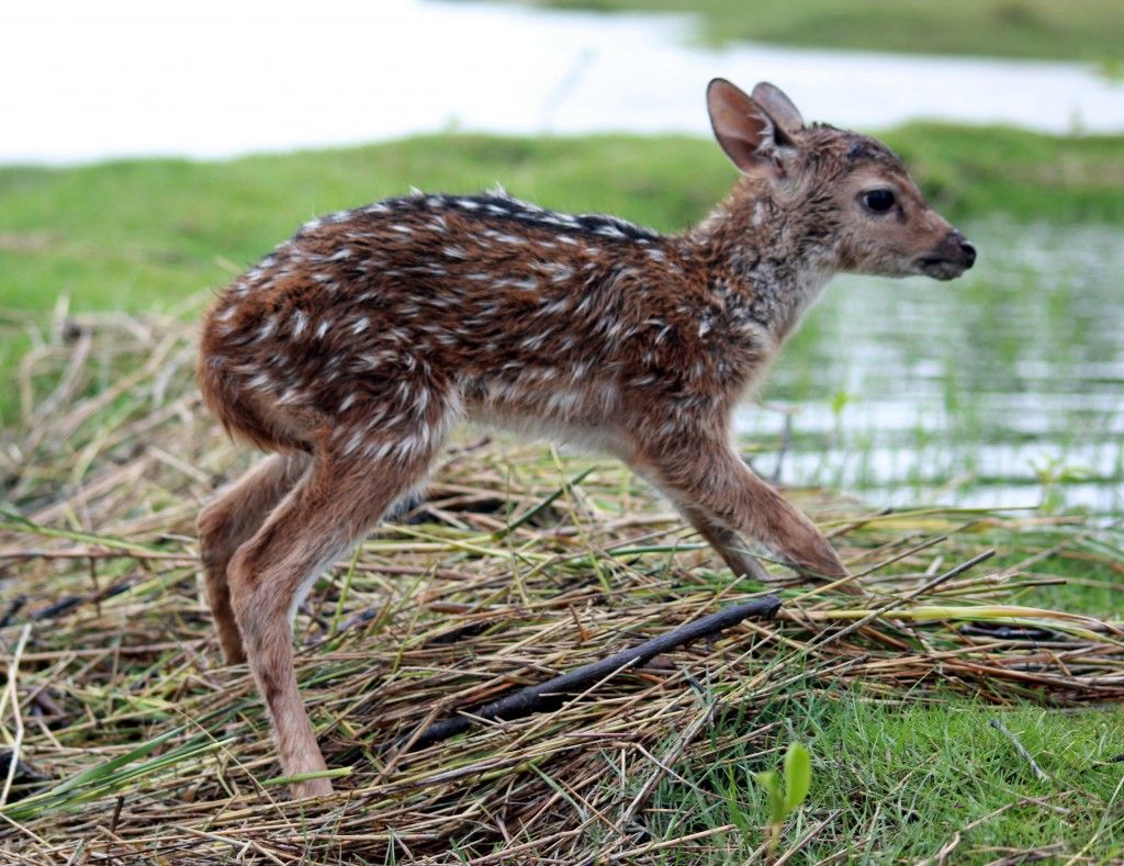 Adventure Sports Network The Gateway To Adventure Sports Baby Deer Deer Animal Stories
