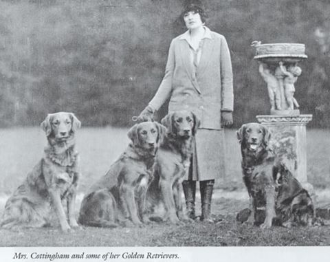 Mrs Cottingham And Her Famous Woolley Golden Retrievers Golden