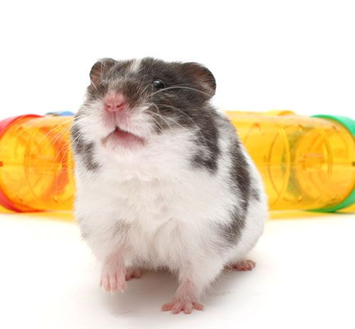 Best Small Animal Pets For Children Small Pets Small Pet Supplies Best Small Pets