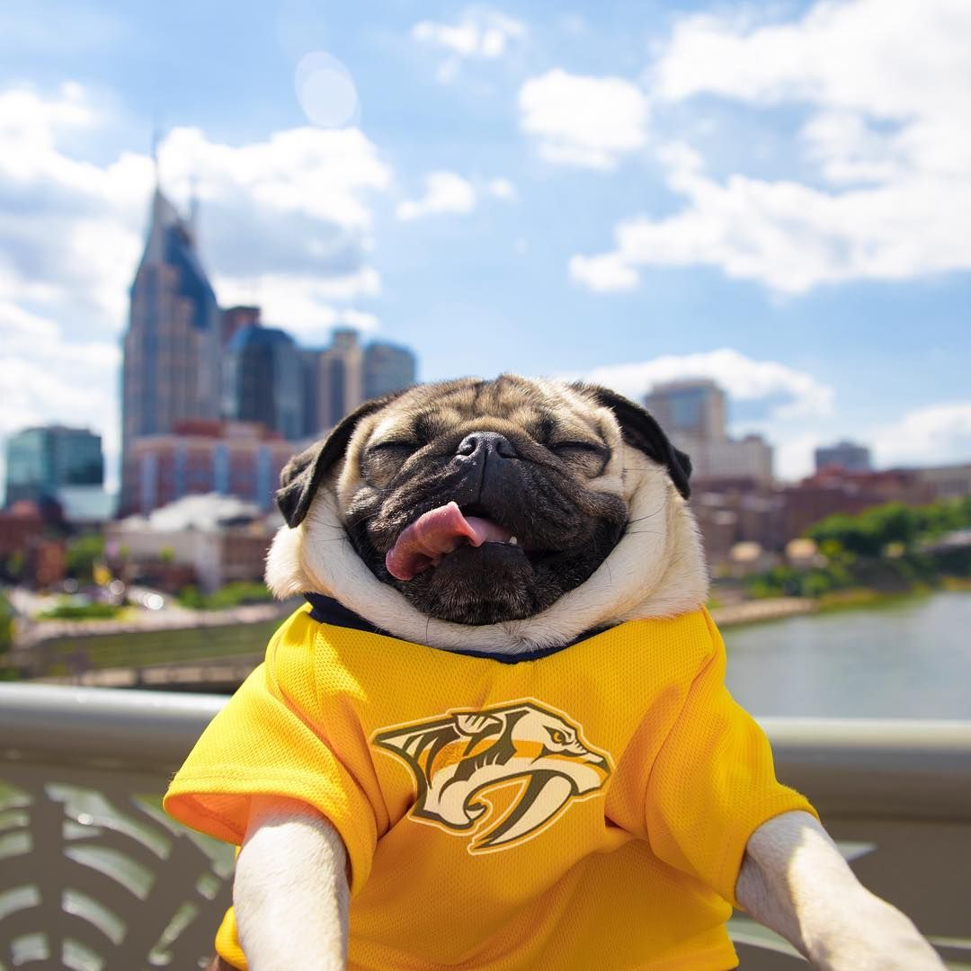 Did You Know Doug The Pug From Instagram Is A Nashville Native