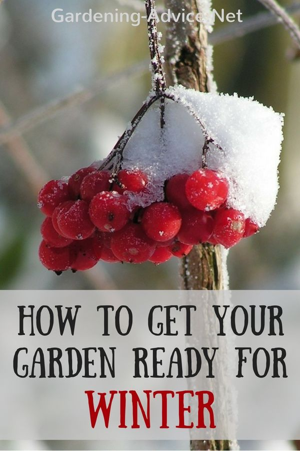 Protecting Plants From Frost Damage In The Winter Garden Frost