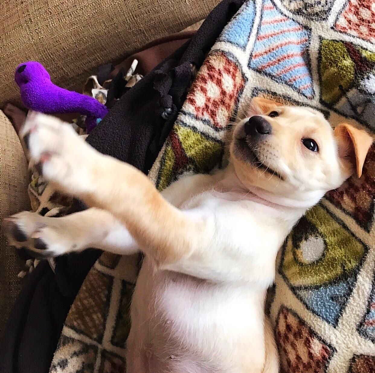 Playtime iftqwscku cute pinterest dog eating dog