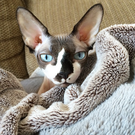 Someone has a cozy Caturday planned. (Photo credit