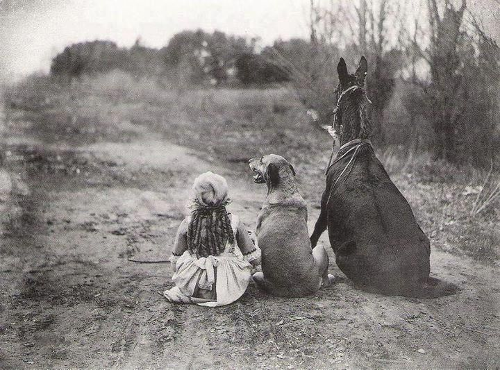 Vintage Photograph Of A Girl With Her Dog And Donkey Vintage Dogs