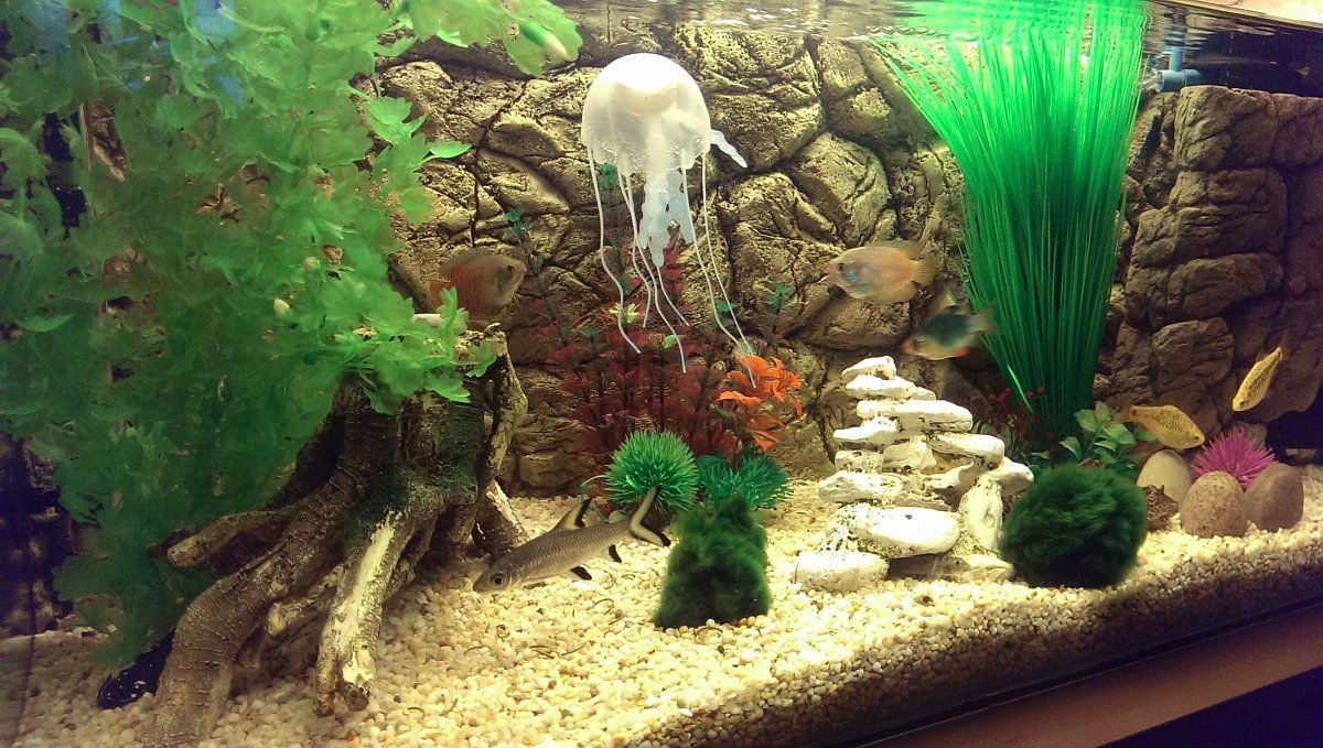 thin background cover fish tank