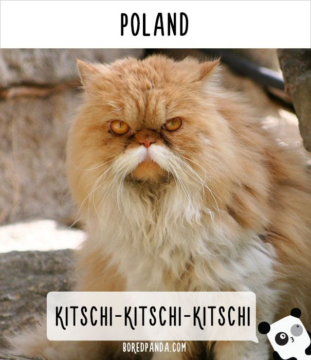 How People Call Cats In Different Countries Cats Cat Feline Cat Call