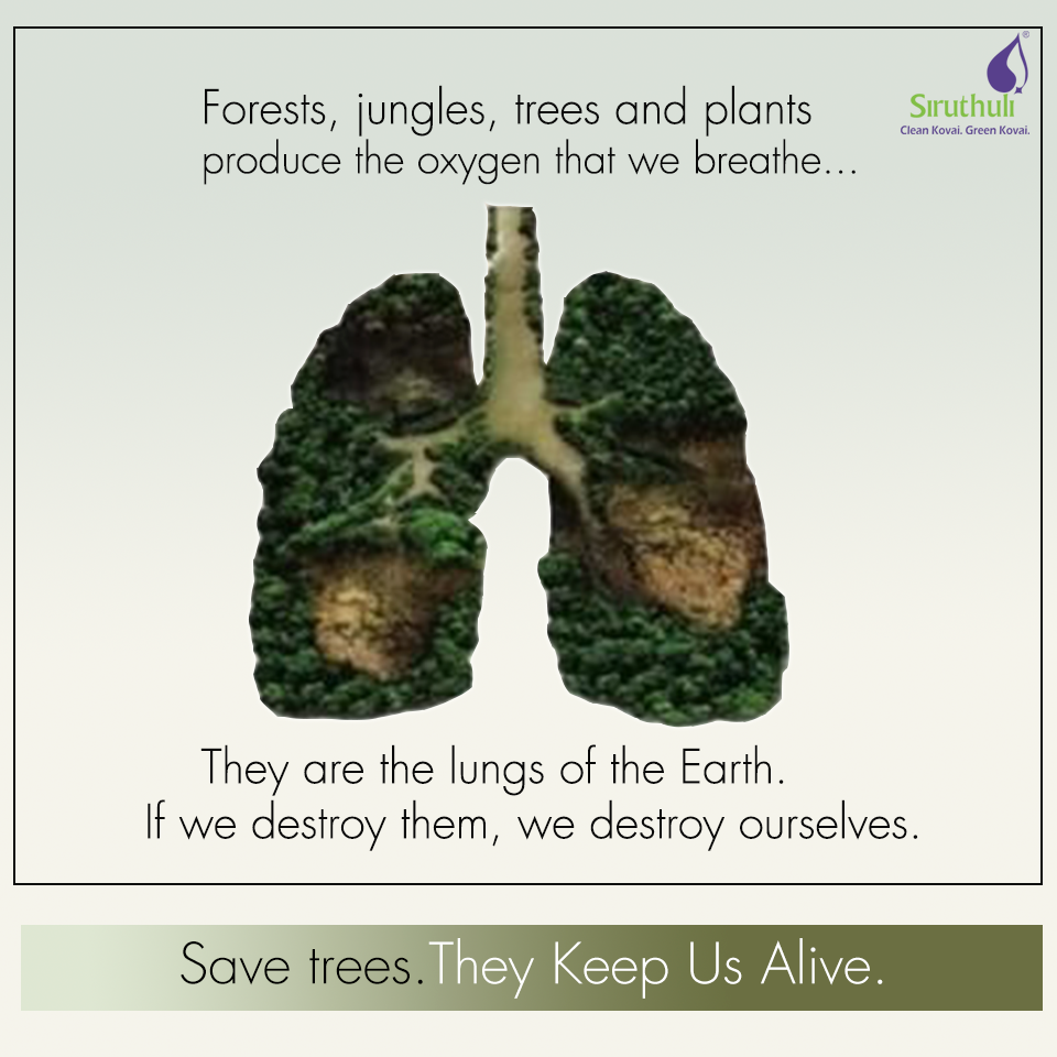 Forests Jungles Trees And Plants Produce The Oxygen That We