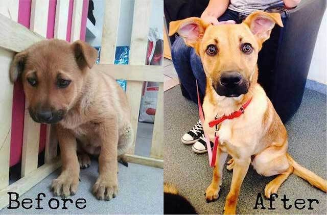 Adopted ♥