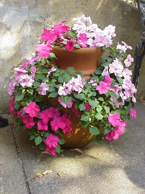 Tower Of Impatiens This Would Look Even Prettier With The Double Impatiens Container Flowers Flower Pots Strawberry Pots