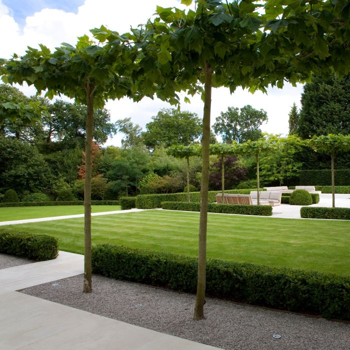 low clipped hedges, white paths and pleached trees - wentworth - diseo de jardines urbanos