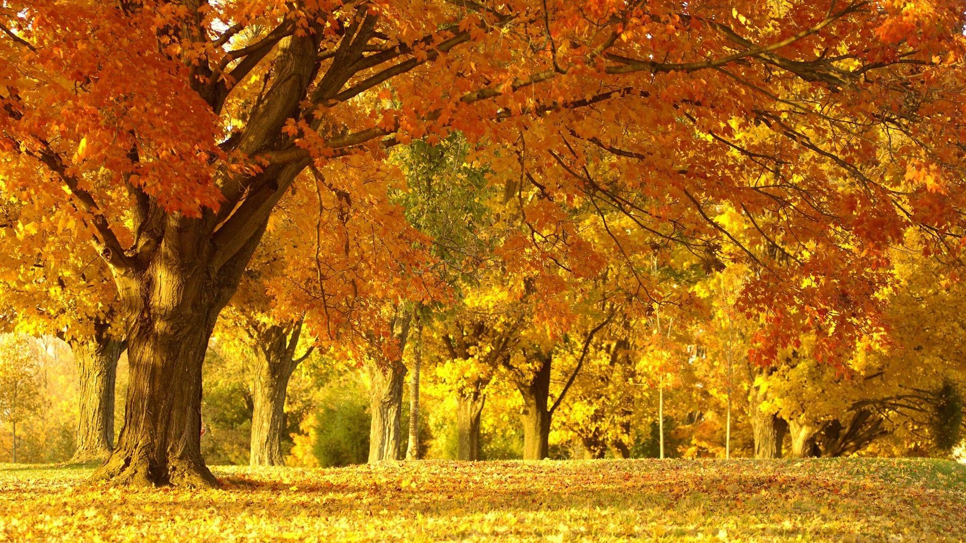 New England Autumn Scenery Beautiful Nature Wallpaper Autumn Scenes