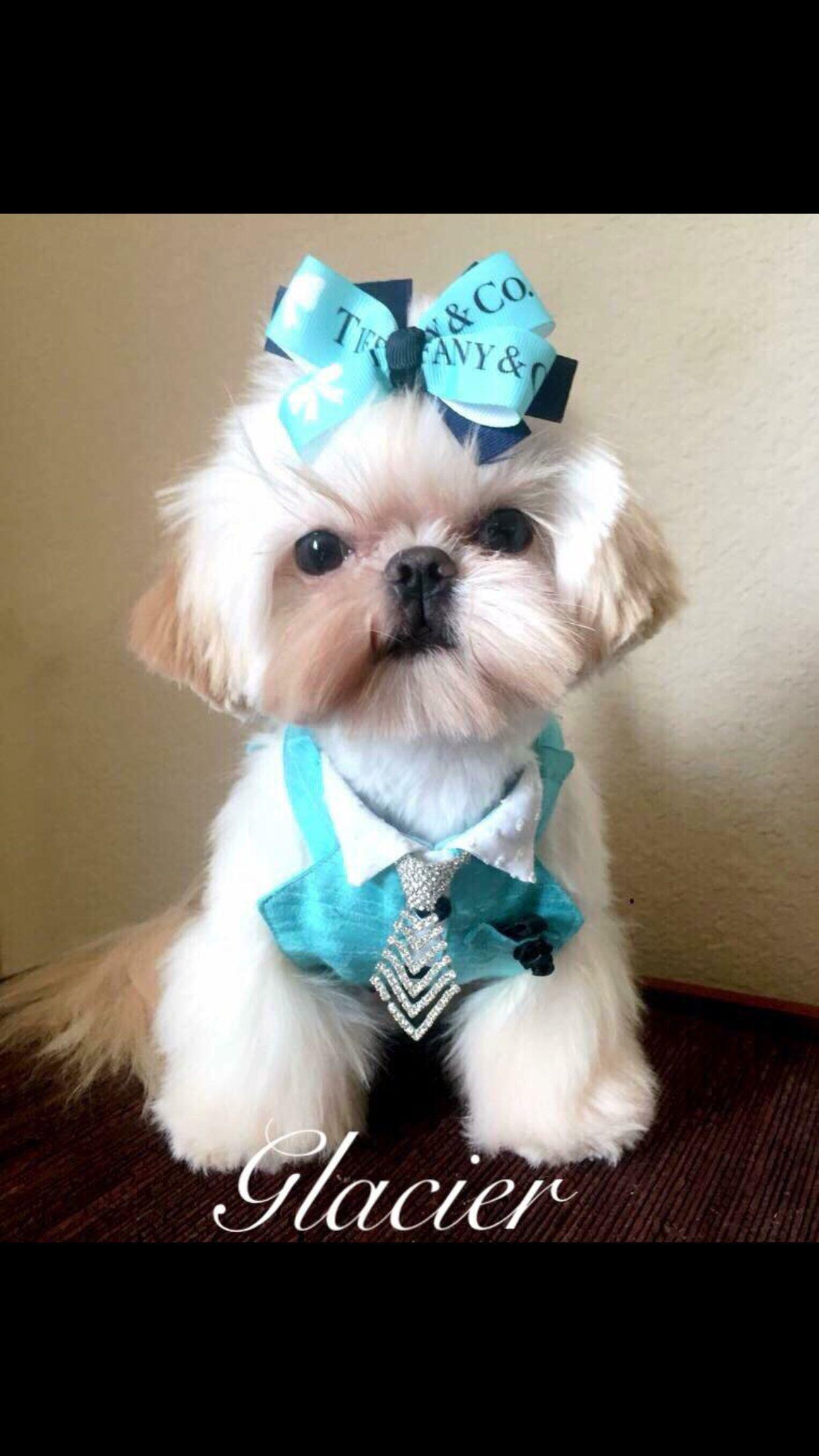Mystery Pet Bandanna  Mystery Pet Scarf  Cat Dog Wear  Tie on Snap On  Boy Girl Bandana
