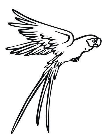 Loro volando Dibujo para colorear | птички | Pinterest | Loros ...
