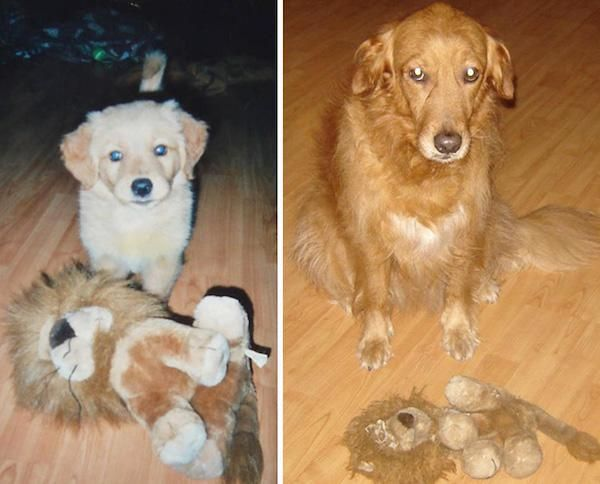 Pets Growing Up With Their Thunder Buddies 23 Photos Cute Cats