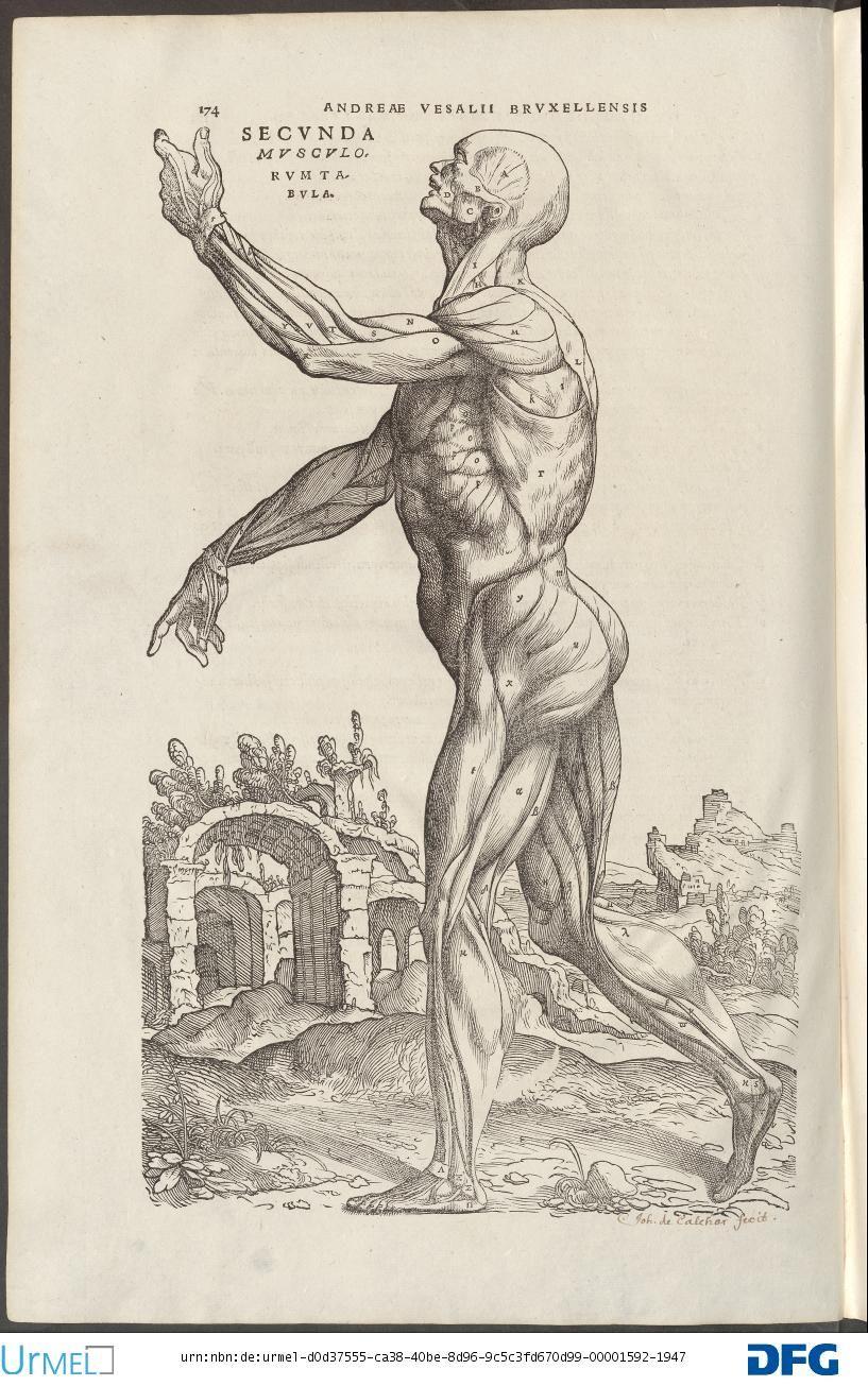 Andreas Vesalius De Humani Corporis Fabrica Physical Therapy