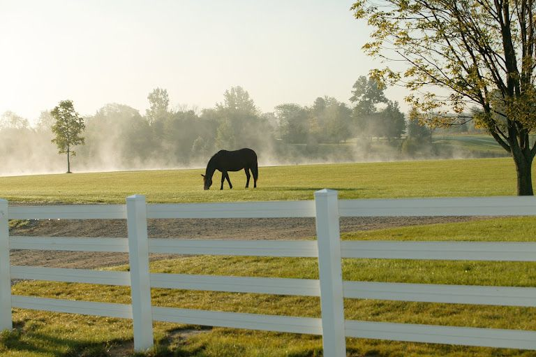 Horse silhouette in the pasture behind fencing