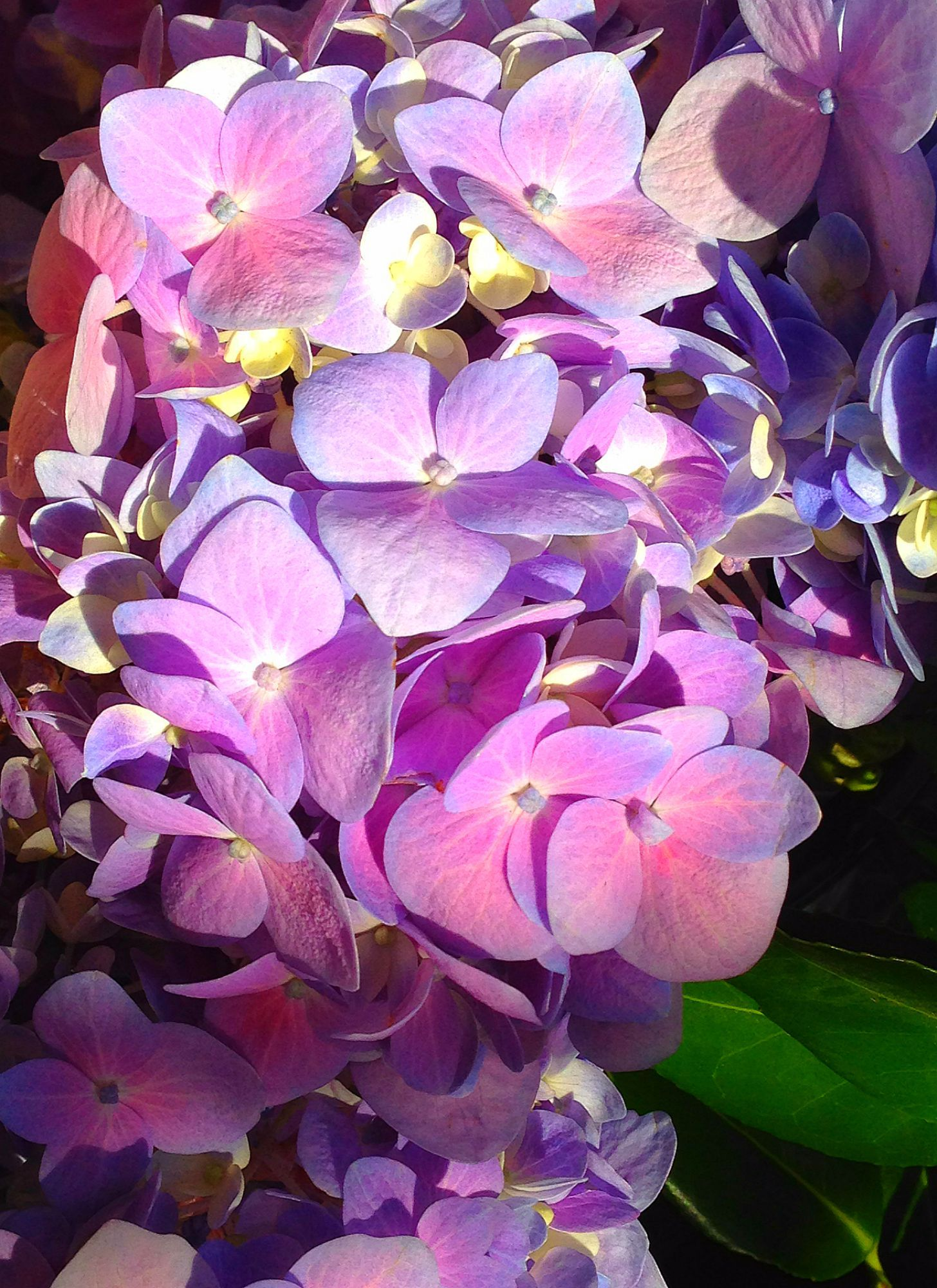 Most Flowers Have An Inspirational Meaning The Hydrangea Is One Of The Few That Has Both Positive And Negative Symbo Symbols And Meanings Flower Power Flowers