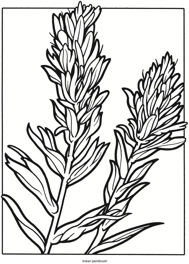 Welcome To Dover Publications Creative Haven Wildflowers Stained
