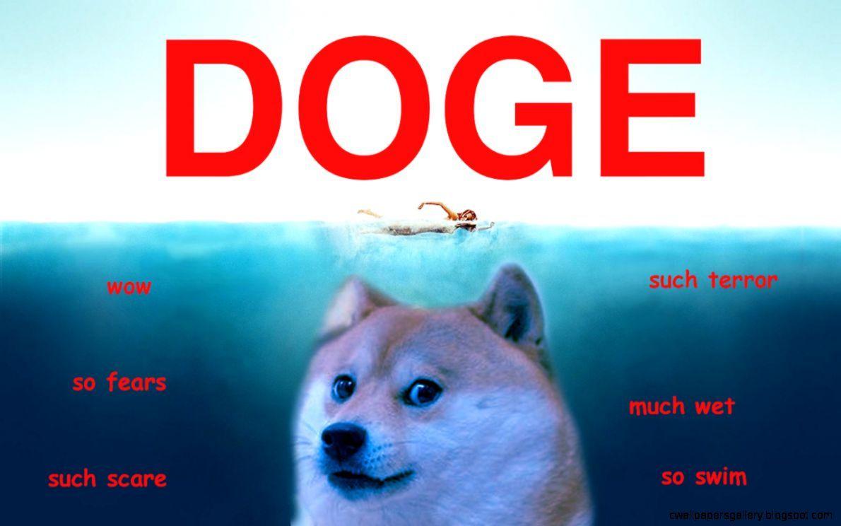 Doge Meme Wallpaper Doge Meme Funny Pictures Funny Memes