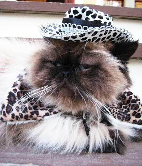 Furry Leopard Print Cowboy Hat