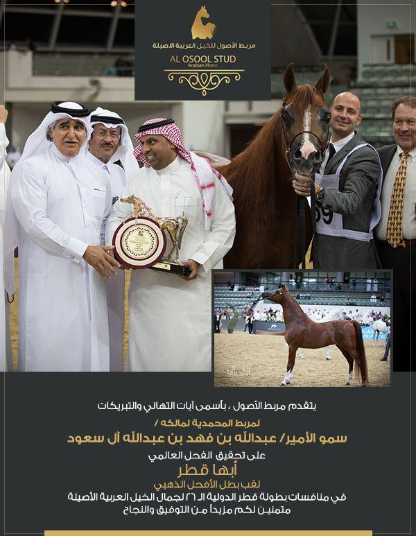 مربط الأصول يهنئ المحمدية على انجاز ابها قطر في قطر Arabian Horse Coat Horses