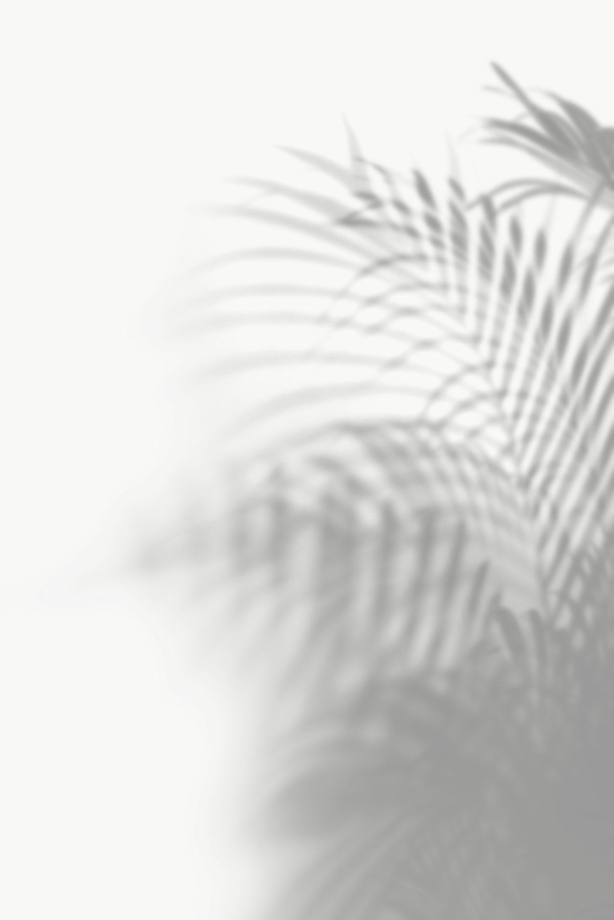 Shadow Of Palm Leaves Design Element Free Image By Rawpixel Com Jira Shadow Images White Background Images All White Background